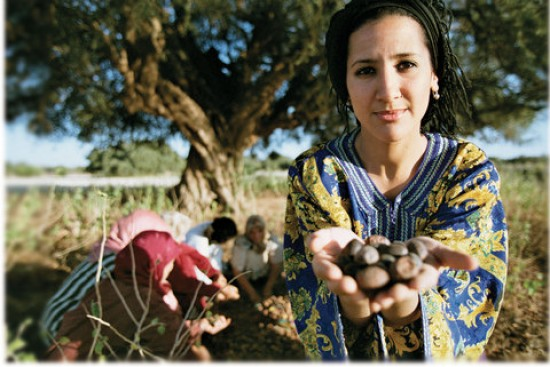 Moroccan Berber women harvesting the argan kernels.