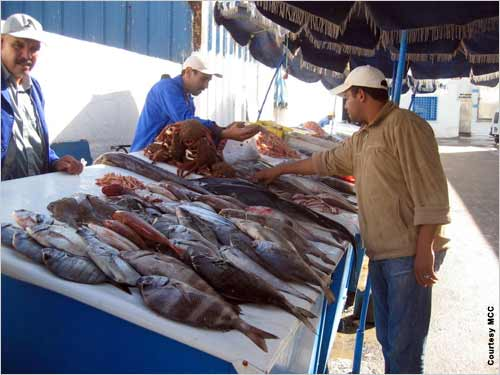 Refrigerated market and transport facilities provide a boost to Morocco's fishing industry.