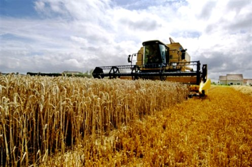 Moroccan Agriculture Minister Aziz Akhannouch expects this year's grains harvest to reach a record 9.7 million tons, including 5.2 million tons of soft wheat.