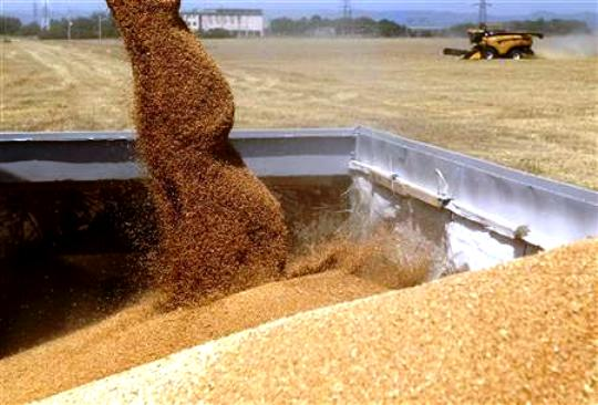 Morocco is likely to halve grain imports after favorable weather raised expectations for a much improved domestic harvest this year.  Reuters